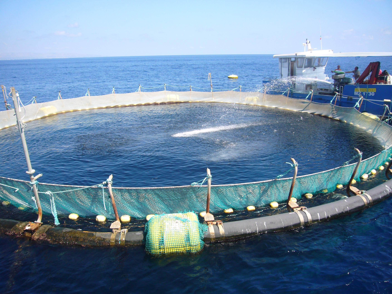 Fao, miglioramento genetico in acquacoltura contro fame mondo