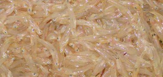 rossetto cicirello pesca