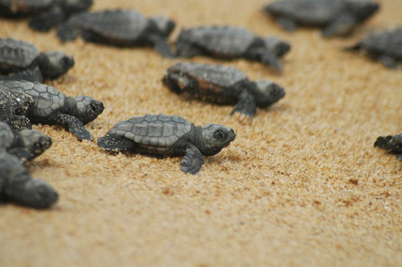 tartarughe