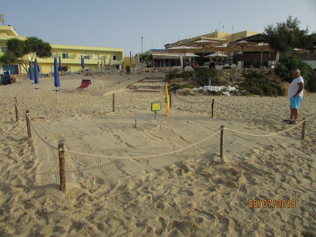 Lampedusa: nidificazione tartaruga marina in spiaggia Guitgia