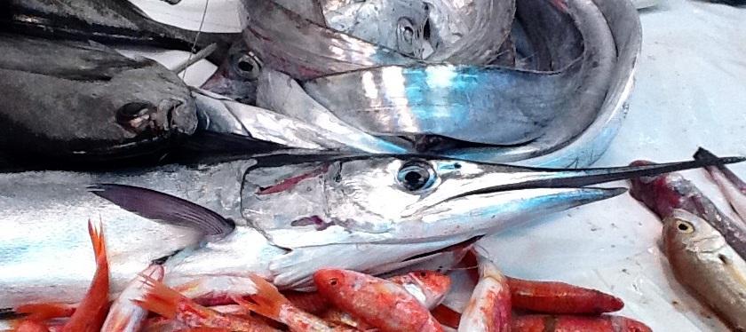 L'Augghia pesce povero, ricchezza del Mediterraneo. Sabato 6 ottobre a Favignana