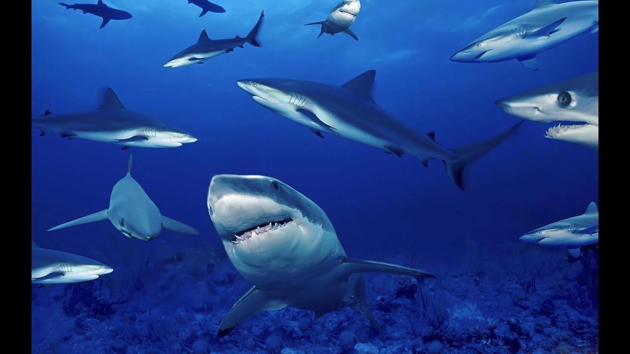 WWF lancia progetto per salvare gli squali nel Mediterraneo