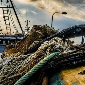 Dalla Commissione pesca dell'Europarlamento arriva lo stop alle reti a strascico entro 100 metri profondità