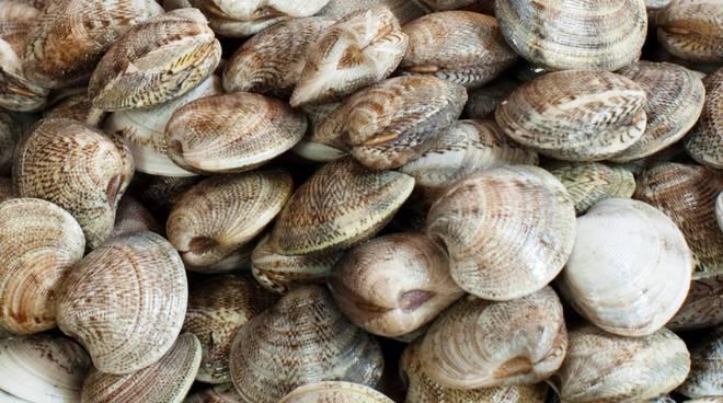 Pesca, Commissione UE proroga deroga italiana sulle vongole