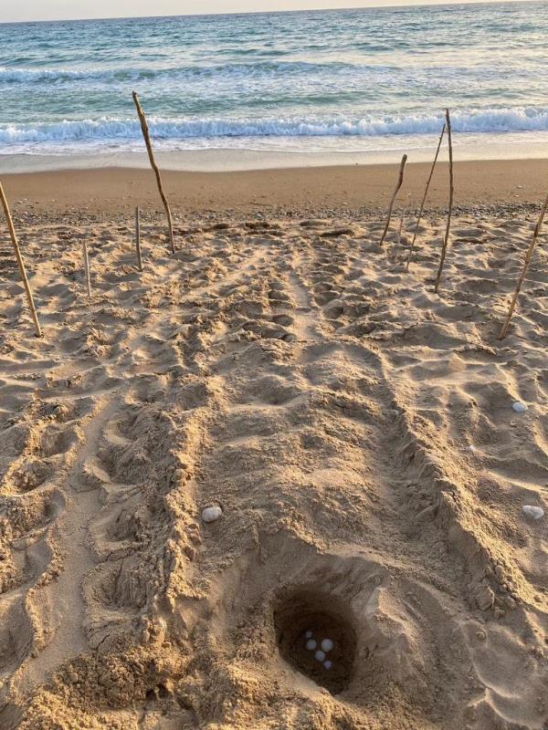 wwf ribera tartarughe marine nido