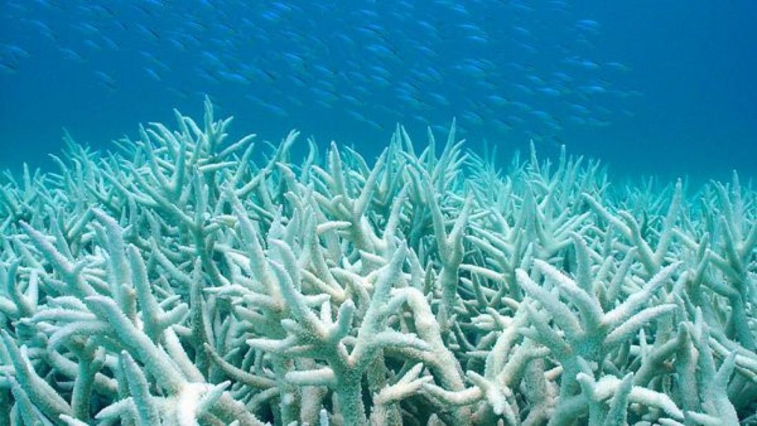 Coralli bianchi